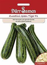 Zucchini Green Tiger F1   Zucchinisamen von Dürr Samen
