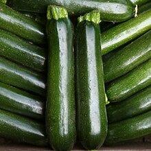 Zucchini - Mitternacht - 15 Samen