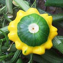 Zucchini seltsame Gemüsesamen Balkon Topf vier