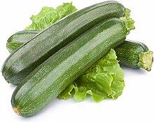Zucchini Soraya Saatgut - Gartenkürbis