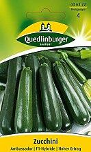 Zucchinisamen - Zucchini Ambassador F1 von Quedlinburger Saatgu