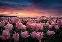 ZXYJJBCL Rosa Tulpe Blume DIY 5D Vollkreis Strass