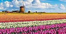 ZXYJJBCL Windmühle Lila Weiße Tulpe Blume DIY 5D